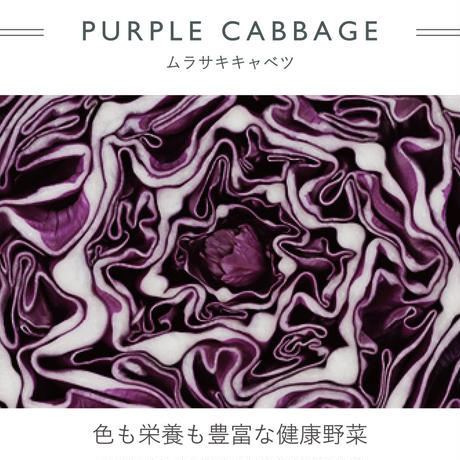 Tシャツ  MALE -  purple cabbage  -