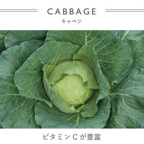 FT030415 / MITTENS -  cabbage  -