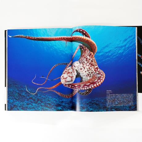 『世界で一番美しいイカとタコの図鑑』