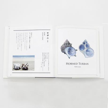 東海大学海洋学部・海洋科学博物館 『子どもと一緒に覚えたい貝殻の名前』