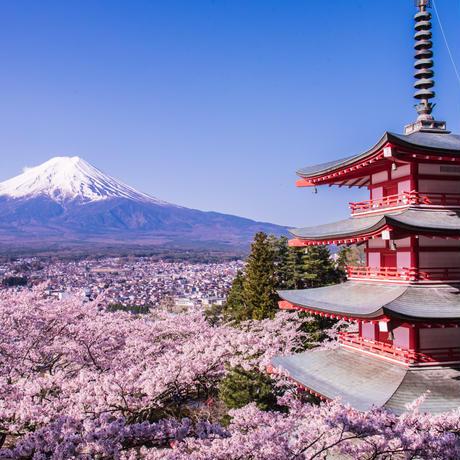 富士山と忠霊塔の桜