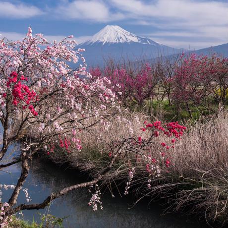 富士山と花園