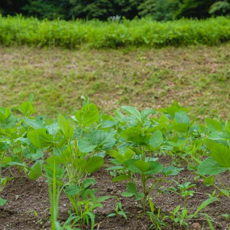 恵み 米みそ 1kg袋入  農薬不使用 2年熟成