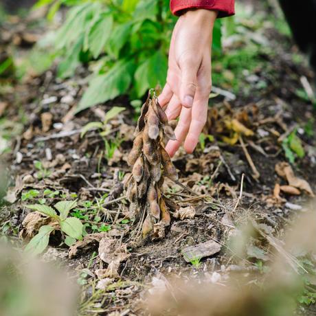自然 落折米みそ 3年熟成