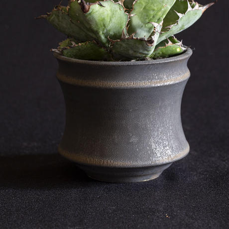 アガベ チタノタ ブラックアンドブルー(9) Agave titanota black and blue