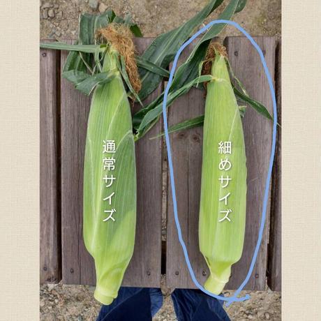【限定販売!】朝採りトウモロコシ  細め12本入り