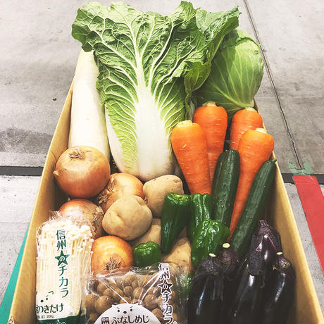 きのこ入り11品目野菜セット(約10kg)
