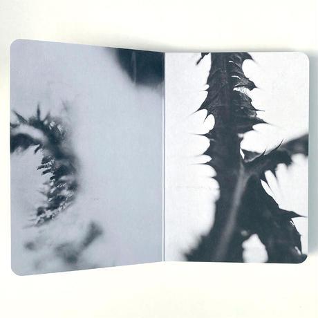 Board Book 3: Geordie Wood by Actual Source + NEW TENDENCY