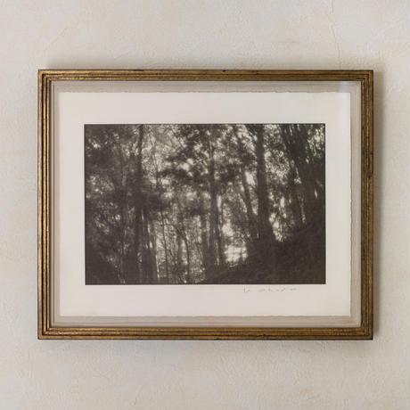 岡田浩志 / 高尾の森にて(S2-f1.4_'20,7,5)