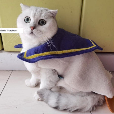 犬猫アヒルの着ぐるみもこもこウェア