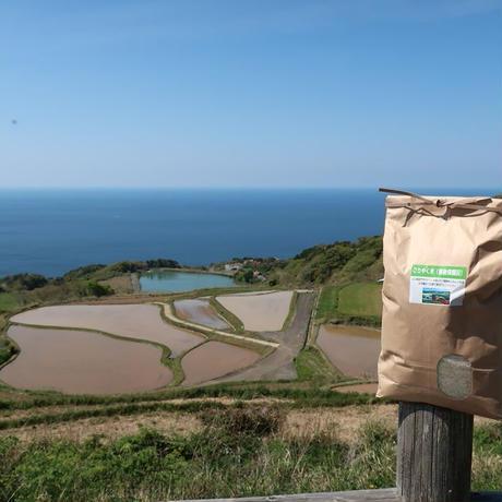 新米 ごりやく米(東後畑棚田こしひかり) 玄米(3kg)