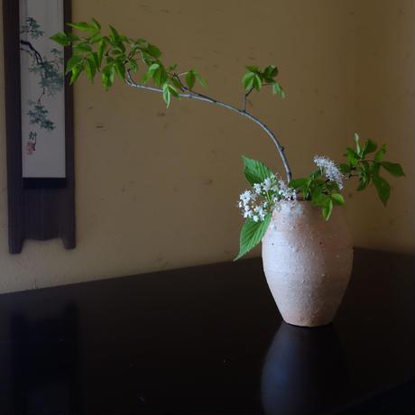Q Tani 十三壷