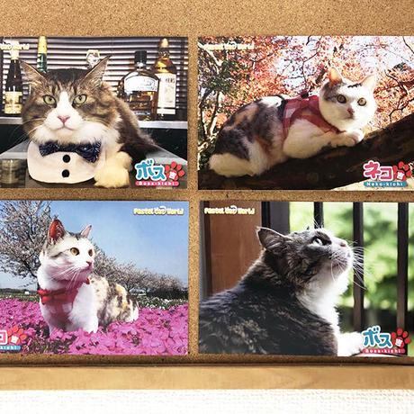 ネコ吉&ボス吉 ポストカード〈4種セット〉 [限定販売] A006