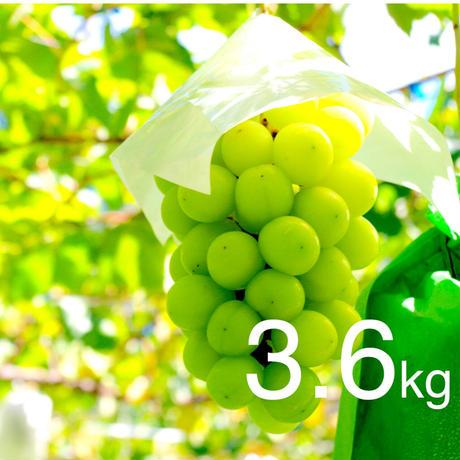 【2020年販売終了しました】シャインマスカット3.6kg☆農家直送