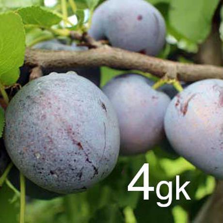 【2021年 終了しました】農家直送☆プルーン品種おまかせ4kg 食べてキレイに