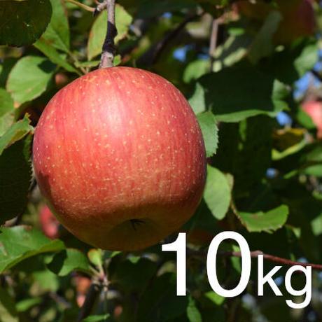 【2020年販売終了しました】ふじ 家庭用10kg☆農家直送 甘味と酸味のバランスが絶妙♪