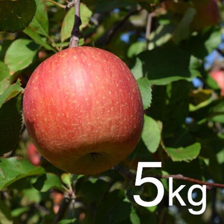 ふじ 家庭用5kg☆農家直送 甘味と酸味のバランスが絶妙♪