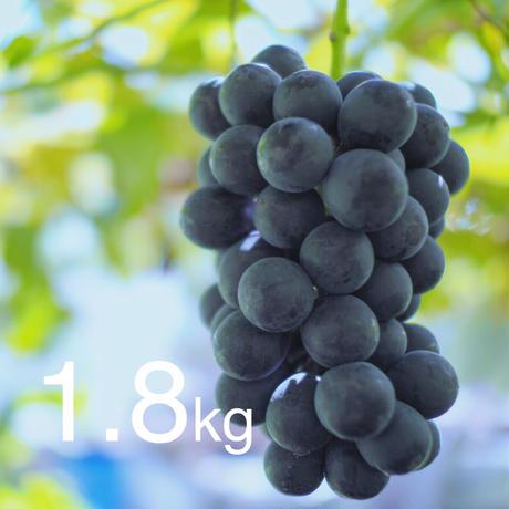 【2020年販売終了しました】種なし巨峰1.8kg☆農家直送