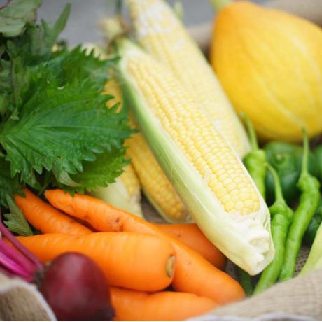 農家直送 里山育ちの無農薬野菜セット【Sサイズ】