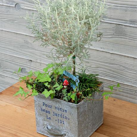 赤いキノコとグリーンガーデンの寄せ植え