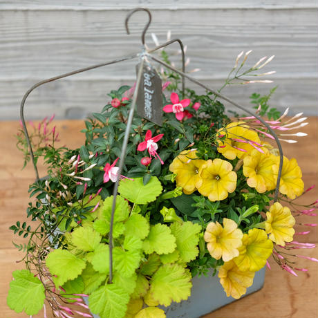 フック付きブリキ鉢の寄せ植え