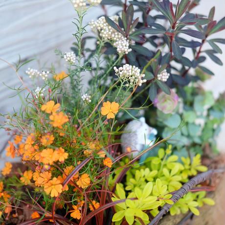 サニースマイルオレンジとハリネズミのお庭ワイヤーバスケット
