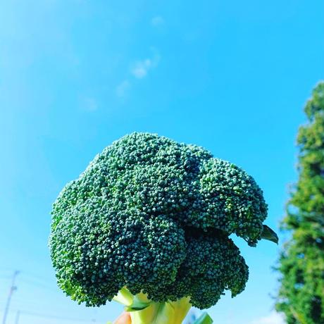 農家直送 おまかせ野菜セット1
