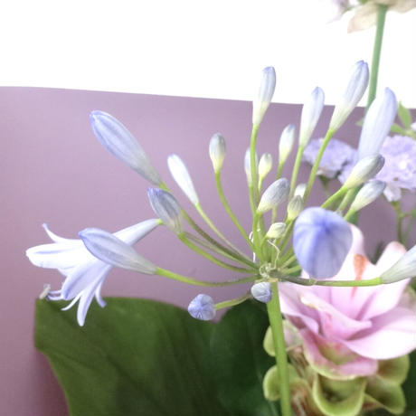 Seasonal gift bouquet M(June)