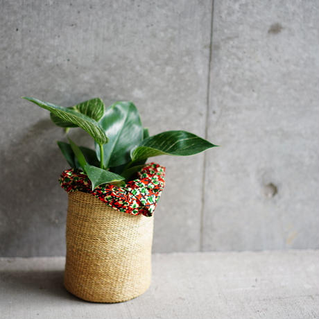 <CLOUDY×gui>PHILODENDRON BASKET  SET(natural)※巾着付き