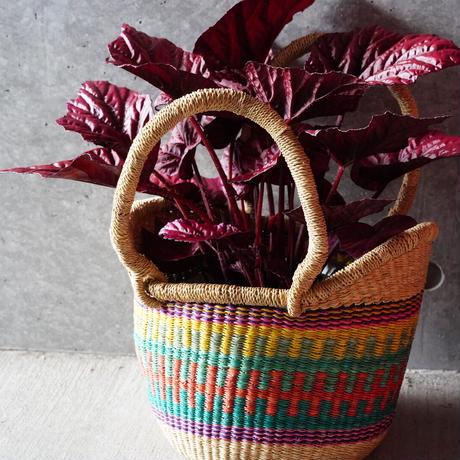 <CLOUDY×gui>Begonia basket  set