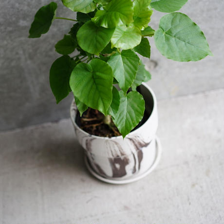 UMBELLATA  RECYCLE POD(BROWN)