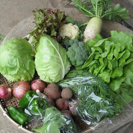 『ぐんべいろく野菜セット【毎週】』(クール送料込)