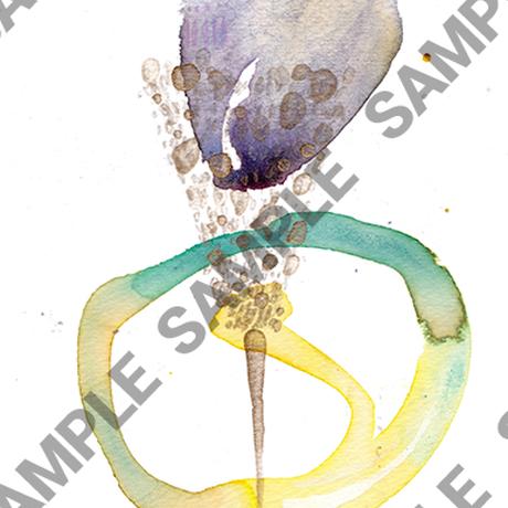 Kayo Nomura / HIKARI -無限の色の上に咲く花-