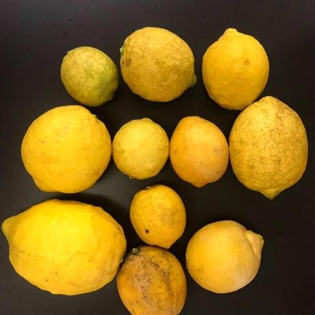 広島県産 無農薬 レモン