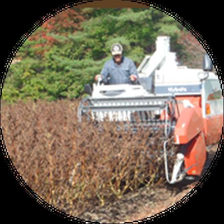3)10月下旬から11月中旬が収穫時期です。