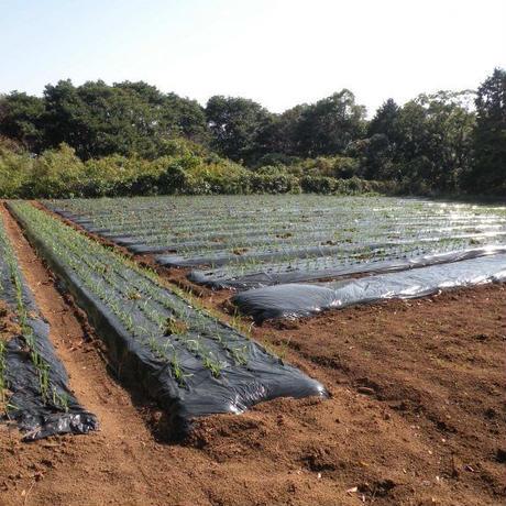 【有機栽培にんにく100%】健美黒にんにく45粒(160g入)|長崎県平戸のオーガニック農園で栽培したにんにくを熟成・発酵