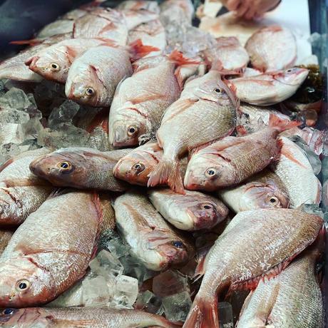 浜潮オリジナル「真鯛カレー」(8個から16個まで)