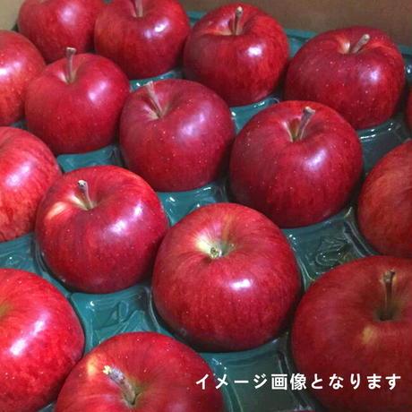 期間限定販売!りんご【レッドゴールド】『Lサイズ・36~40玉入り(贈答用)』【10㎏】《北海道壮瞥町産》