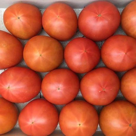 ブリックスナイン トマト