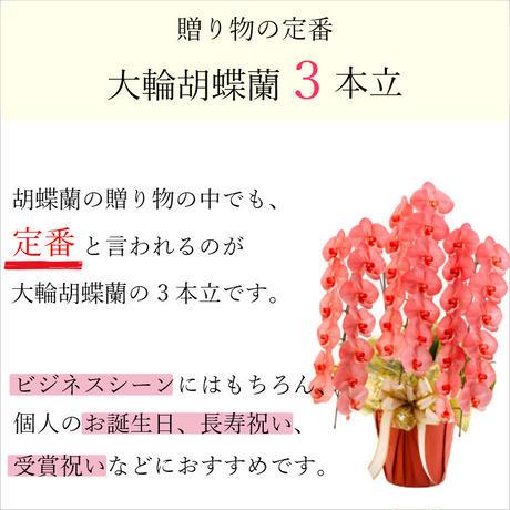 大輪胡蝶蘭 3本立 MIYABI 「レッド」