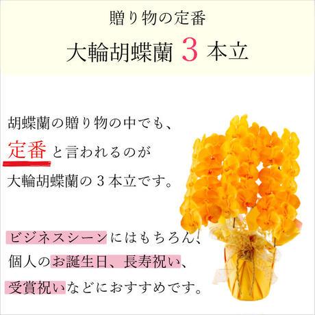 大輪胡蝶蘭 3本立 MIYABI「オレンジ」