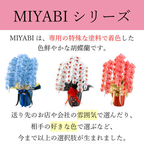 大輪胡蝶蘭 5本立 MIYABI 「すみれ」