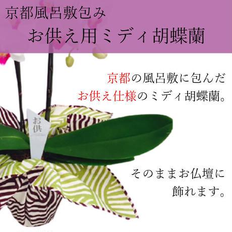 ミディ胡蝶蘭2本立 風呂敷包み 4号 お供え お悔みの花 ピンク/白
