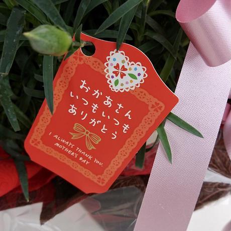 カーネーション ピンク 6号 送料無料