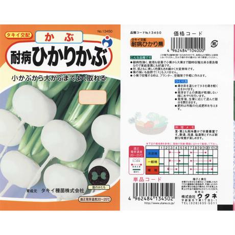 タキイ交配耐病ひかりかぶ / 送料込 3g ギフト