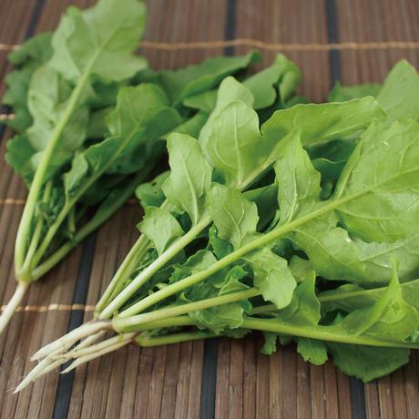 Natural Farm カンタン栽培キット/ サラダルッコラ 栽培セット