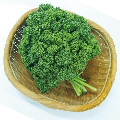 Natural Farm カンタン栽培キット/ カールパセリ 栽培セット
