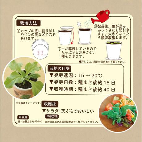 Natural Farm カンタン栽培キット/ アイスプラント 栽培セット