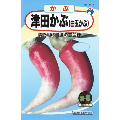 津田かぶ(曲玉かぶ) / 送料込 8g ギフト