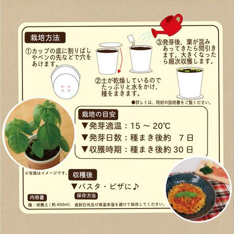 Natural Farm カンタン栽培キット/ スイートバジル 栽培セット